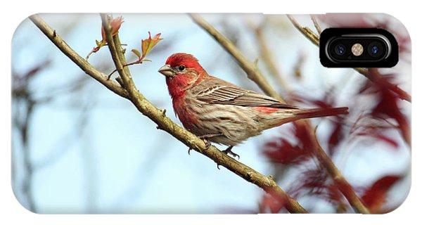Little Finch IPhone Case