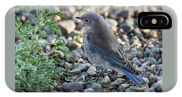 IPhone Case featuring the photograph Little Fledgling Mountain Bluebird by John Brink
