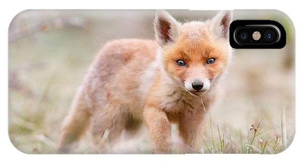 Little Fox Kit, Big World IPhone Case
