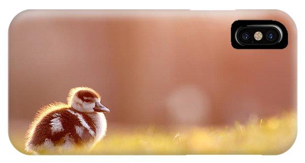 Cute Bird iPhone Case - Little Furry Animal - Gosling In Warm Light by Roeselien Raimond