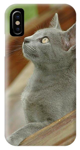 Little Gray Kitty Cat IPhone Case