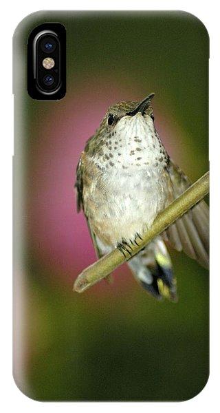 Little Humming Bird IPhone Case