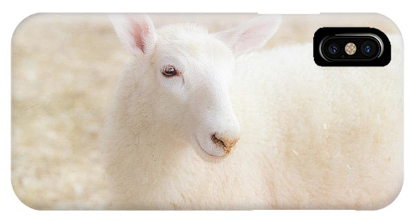 Little Lamb IPhone Case