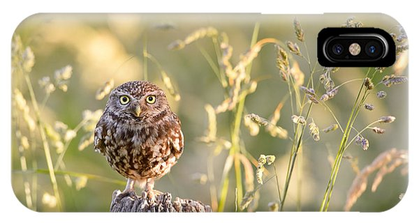 Cute Bird iPhone Case - Little Owl Big World by Roeselien Raimond