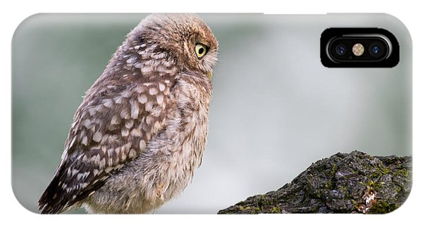 Little Owl Chick Practising Hunting Skills IPhone Case