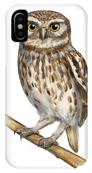 Little Owl Or Minerva's Owl Athene Noctua - Goddess Of Wisdom- Chouette Cheveche- Nationalpark Eifel IPhone Case