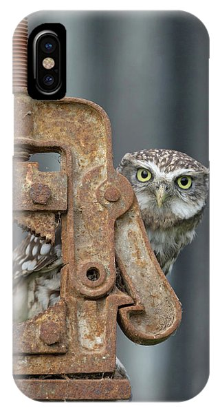 Little Owl Peeking IPhone Case