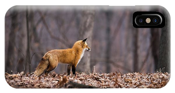 IPhone Case featuring the photograph Little Red Fox by Andrea Silies