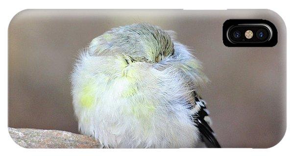 Little Sleeping Goldfinch IPhone Case