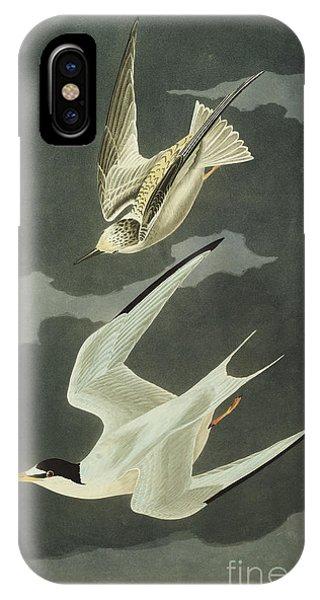 1851 iPhone X Case - Little Tern by John James Audubon