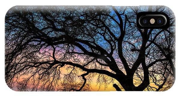 Live Oak Under A Rainbow Sky IPhone Case