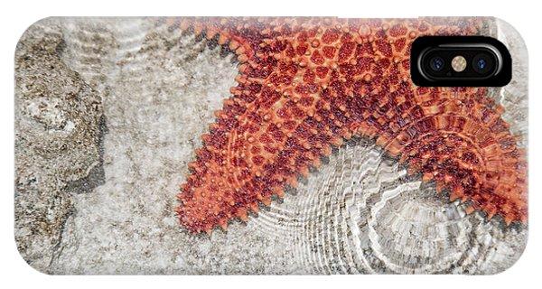 Carribbean iPhone Case - Live Starfish Natural Habitat by Betsy Knapp