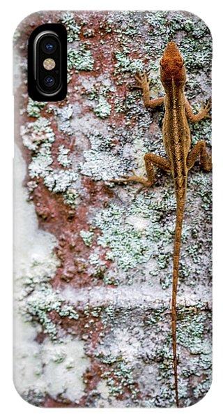 Lizard And Lichen On Brick IPhone Case