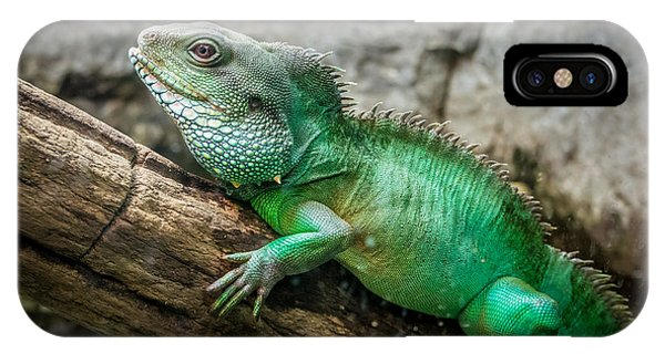 Lizard On Branch IPhone Case