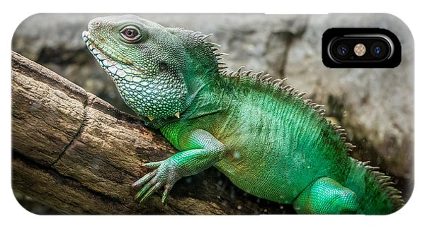 Lizard On Branch IPhone Case