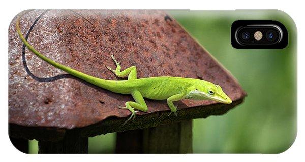Lizard On Lantern IPhone Case