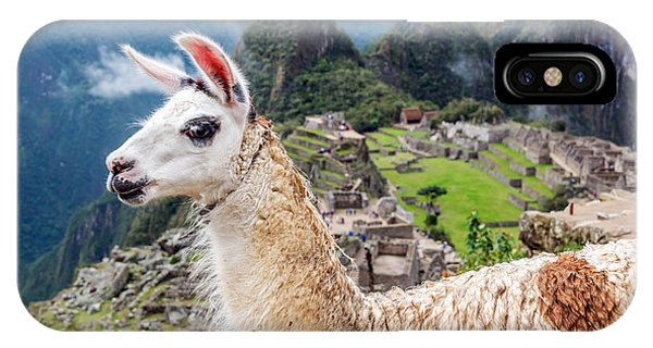 Llama iPhone Case - Llama At Machu Picchu by Jess Kraft