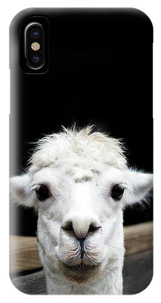 Llama iPhone Case - Llama by Lauren Mancke