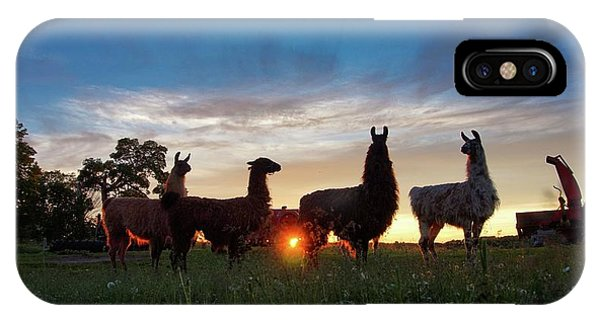 Llamas At Sunset IPhone Case