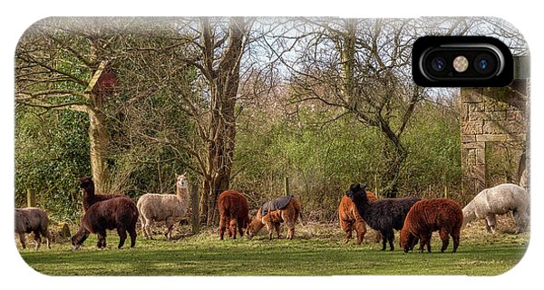 IPhone Case featuring the photograph Alpacas In Scotland by Jeremy Lavender Photography