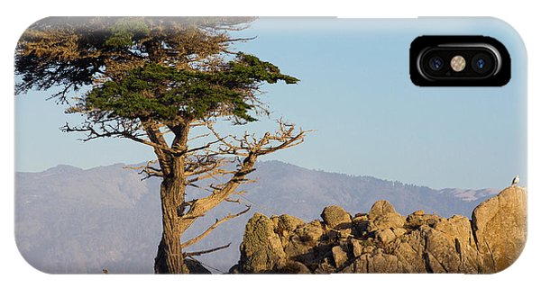 Lone Cypress Tree  IPhone Case