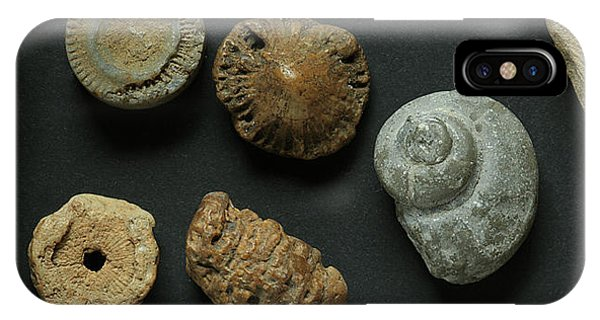 Local Fossils  IPhone Case