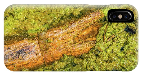 Log In Algae IPhone Case