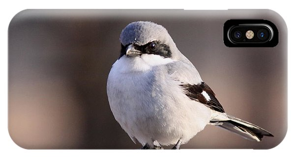 Loggerhead Shrike - Smokey IPhone Case