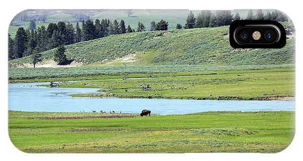 Lone Bison Out On The Prairie IPhone Case