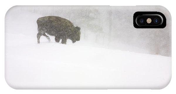 Lone Buffalo Bull In Winter Storm IPhone Case