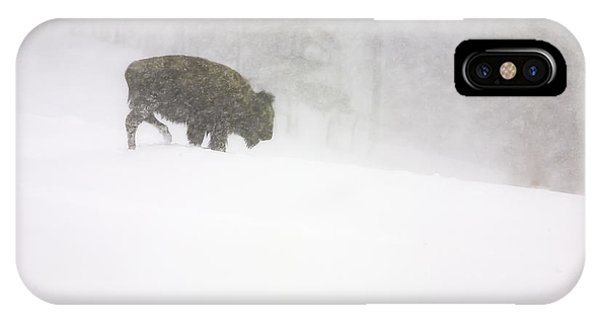 Lone Buffalo Bull In Winter Storm IPhone Case