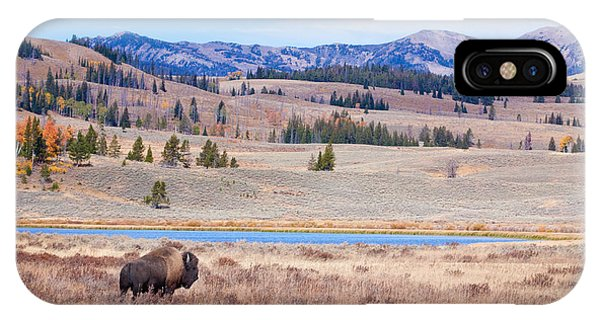 Lone Bull Buffalo IPhone Case