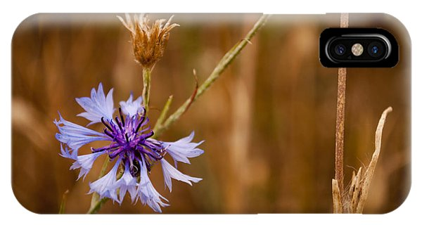 Lone Cornflower IPhone Case
