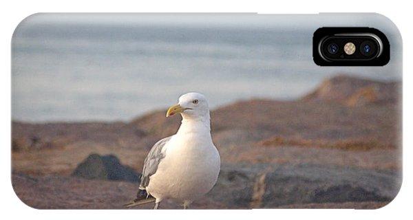 Lone Gull IPhone Case