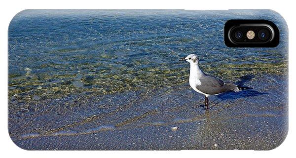 Lone Seagull At Miramar Beach In Naples IPhone Case