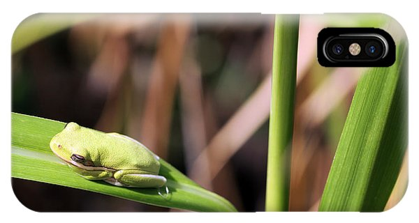 Lone Tree Frog IPhone Case