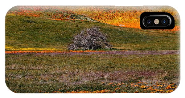 Lone Tree In A Sea Of Orange And Yellow IPhone Case
