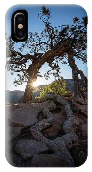 Lone Tree In Zion National Park IPhone Case