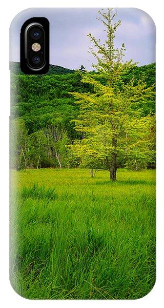 Lone Tree Sieur De Mont Woodland Acadia IPhone Case
