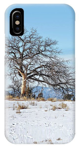 Lone Tree Winter Scene IPhone Case