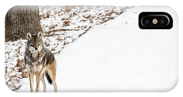 IPhone Case featuring the photograph Lone Winter Coyote by Andrea Silies