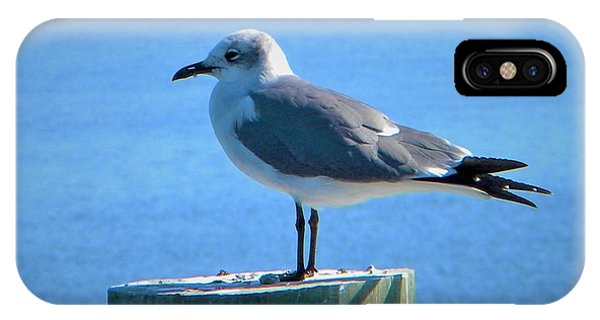 Lonely Seagull IPhone Case