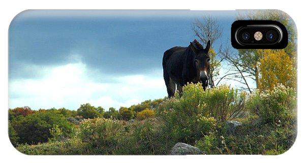 Lonesome Donkey IPhone Case