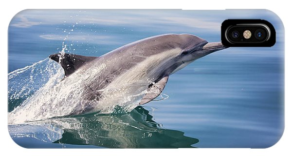 Long Beaked Common Dolphin IPhone Case