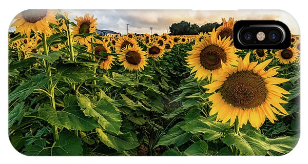 Long Island Sunflowers  IPhone Case