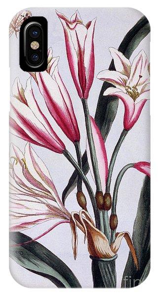 Amaryllis iPhone Case - Long Leaved Amaryllis by Pierre-Joseph Buchoz