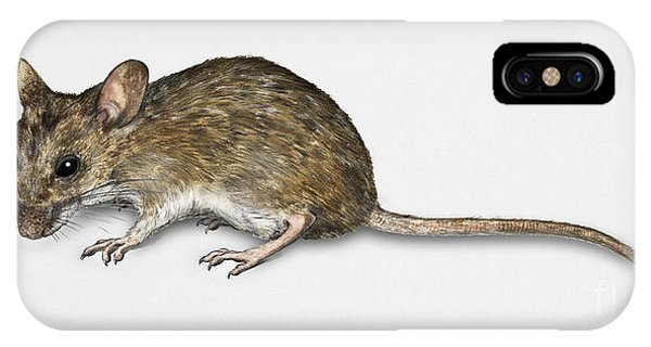Long Tailed Field Mouse Apodemus Sylvaticus - Wood Mouse - Moulo IPhone Case