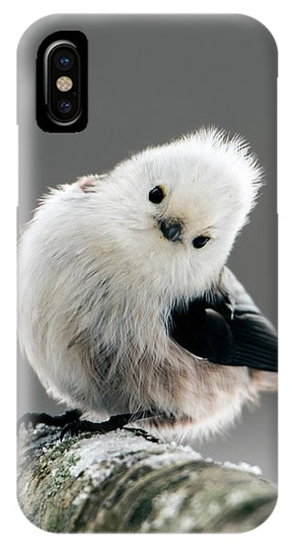 Charming Long-tailed Look IPhone Case