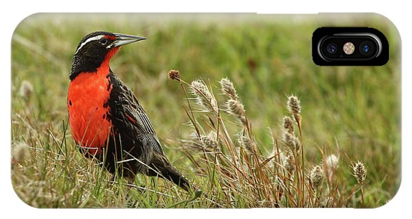 Meadowlark iPhone Case - Long-tailed Meadowlark by Bruce J Robinson