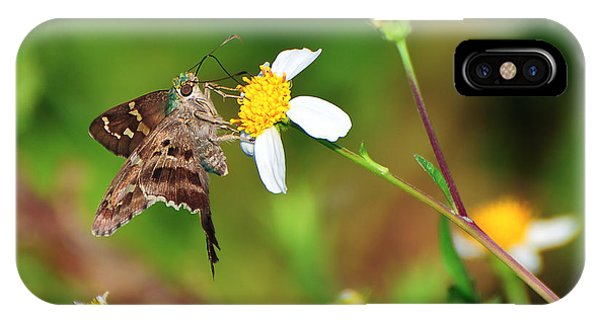Wakulla iPhone Case - Long-tailed Skipper Butterfly by Rich Leighton